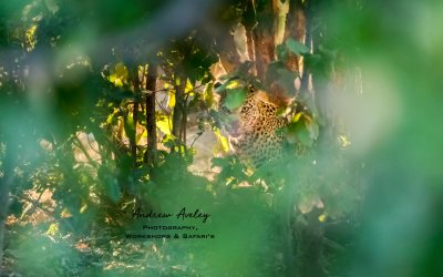 Passion and Light – My Africa