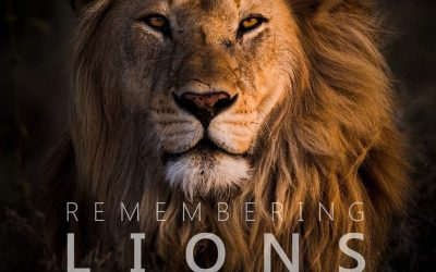 Remembering Lions