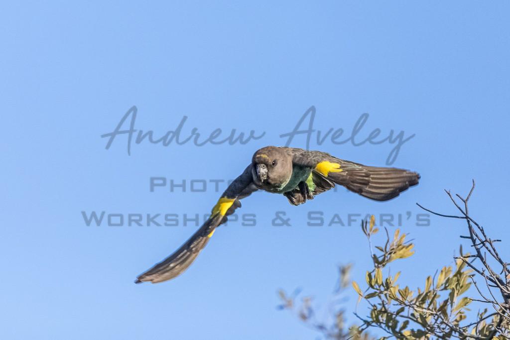 Okavango Birdlife