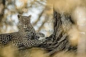 Okavango Predators