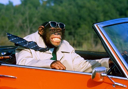 Image result for ape driving sports car