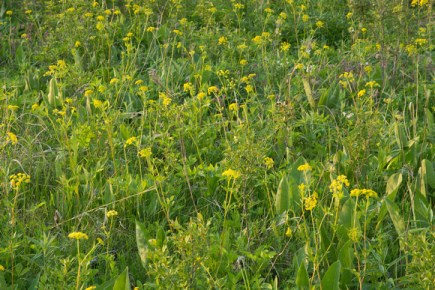 Upland Plants