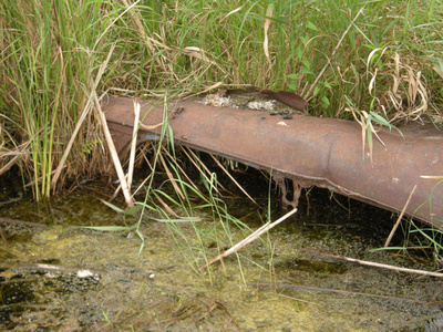 Car Body Sunk in Wetland