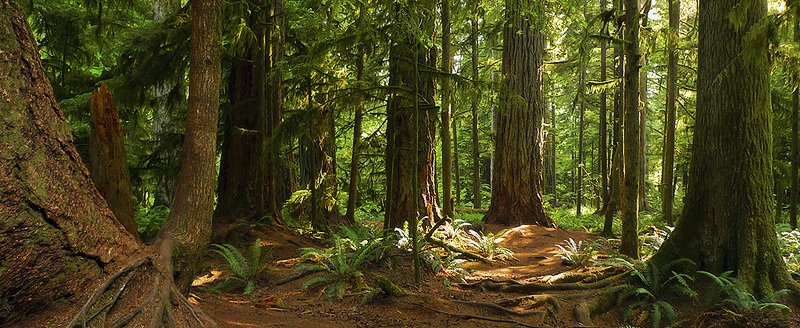 Victoria Falls Hd Wallpaper Logging Around Cathedral Grove Highlights Need For