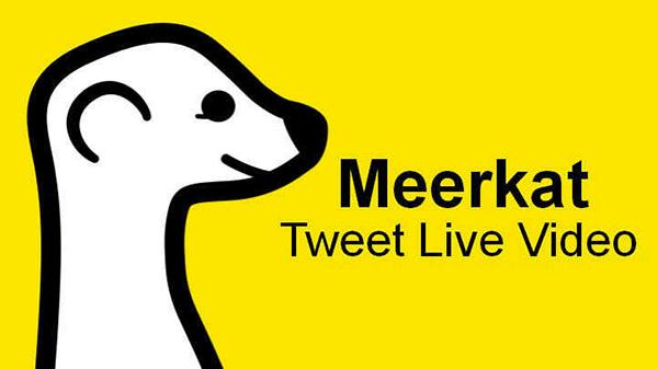 Meerkat Twitter