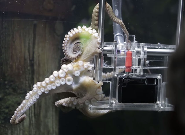 octopus-sealife-sony