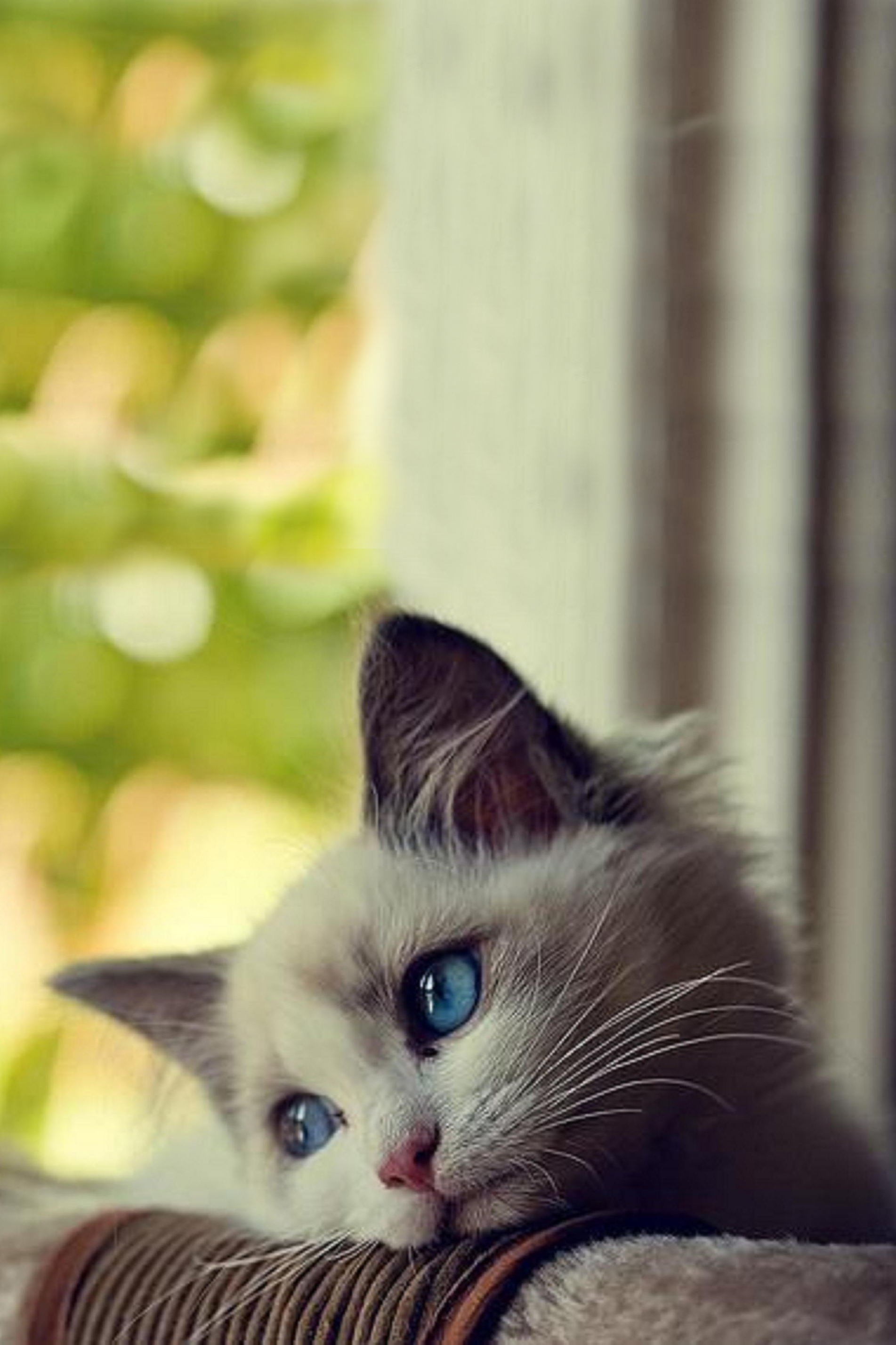Cute Girl Wallpaper For Android Mobile Cute Kitten Bored Android Wallpaper