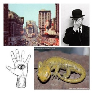 Review of 'A Congr'ss' album by Yellow Salamad'r 4