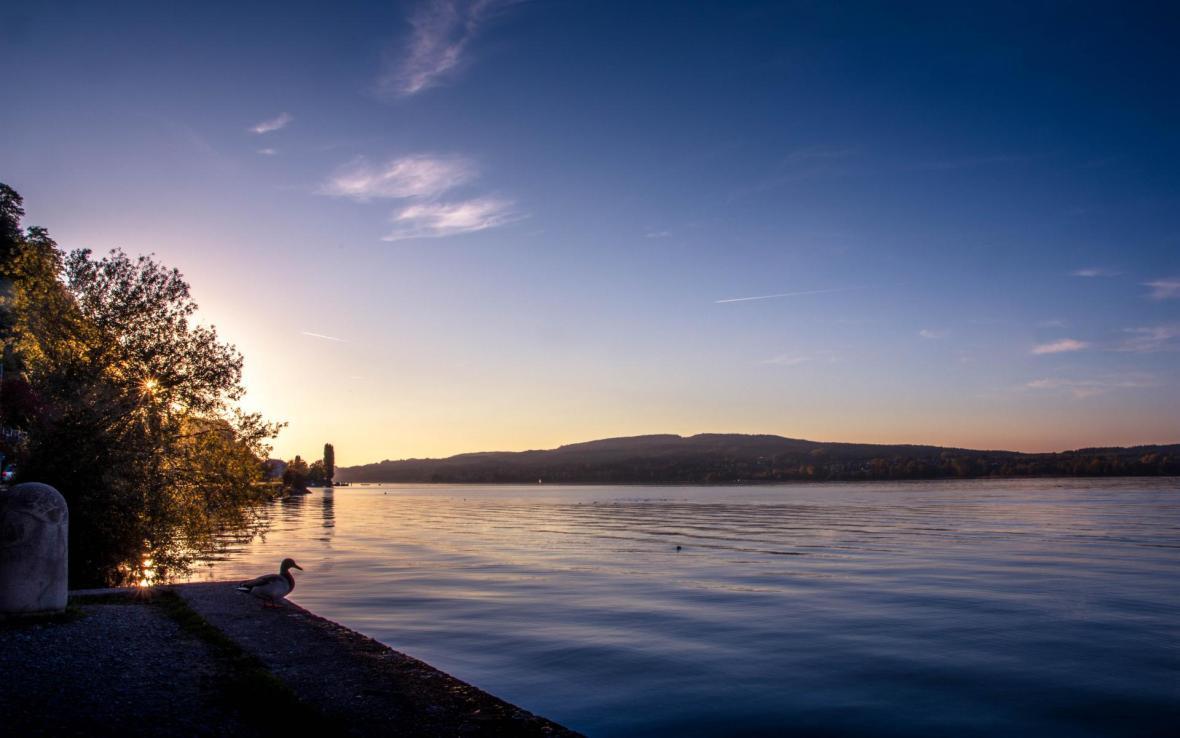 Sicht über den Rhein mit einer Ente