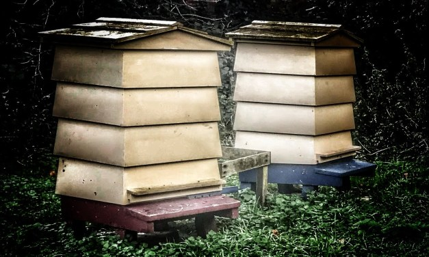 Introduction to Beekeeping – (6) Hive Designs