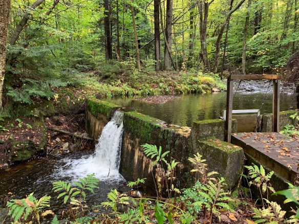 Dam in the forest.