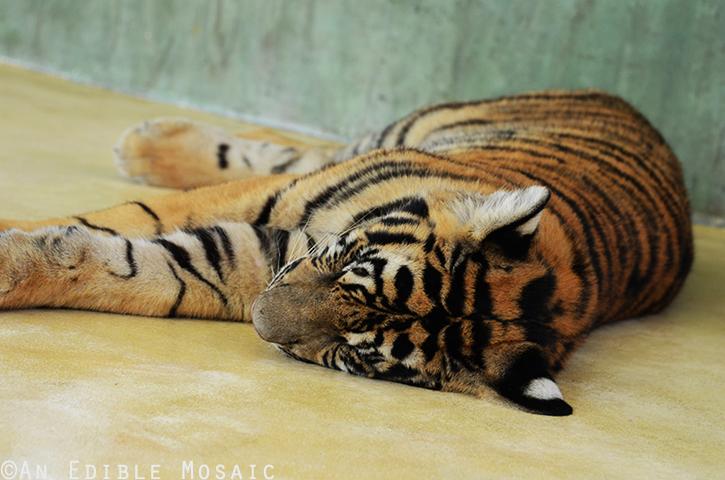 Tiger Kingdom 3