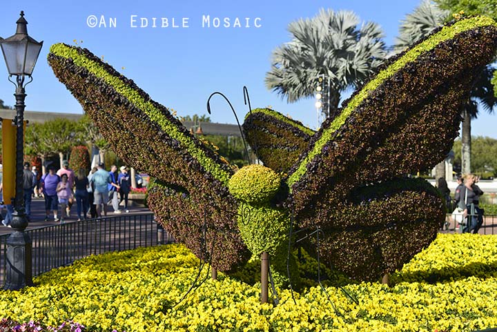 Butterfly Topiary at Epcot