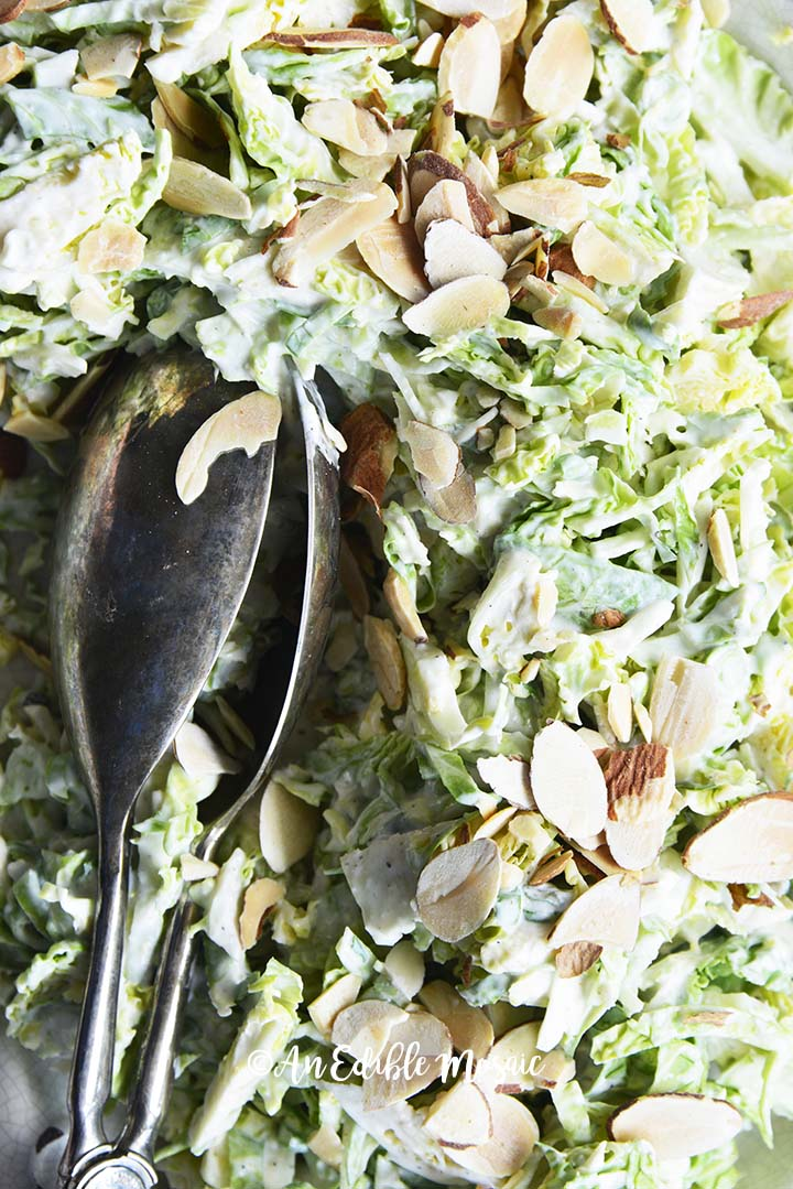 Close Up Overhead View of Shaved Brussels Sprouts Salad