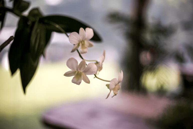 Wisata Flora