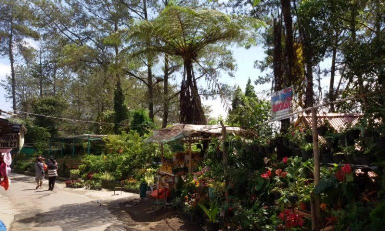 Agrowisata Desa Nglurah