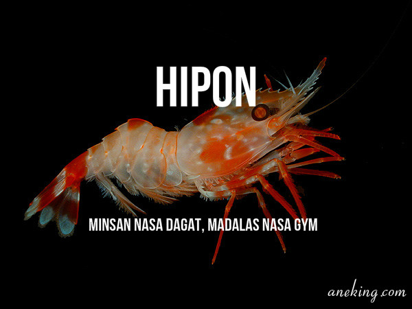 hipon