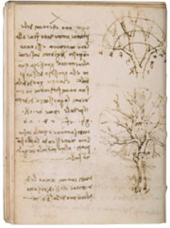 da Vinci rule of trees
