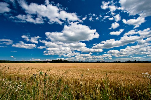 A photograph shows a bright blue sky with passing white clouds over a golden field of ripe grain.