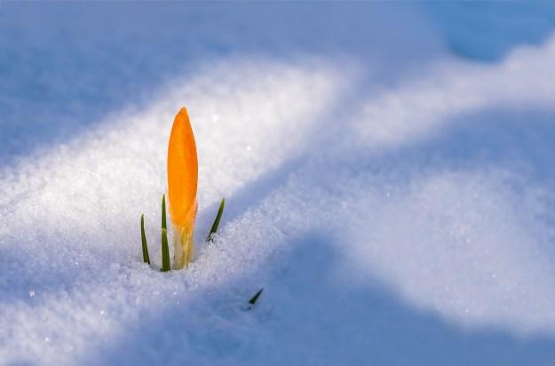 spring-awakening-3132112_1920