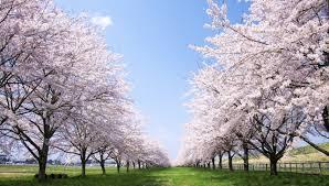 【春の明るめグレイカラー】