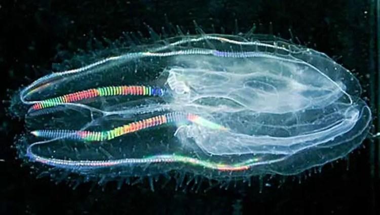 Seres bioluminiscentes