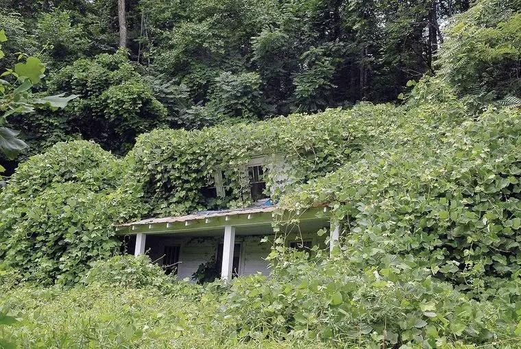 Fotografía de una casa consumida por el Kudzu