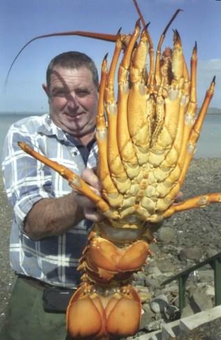 Fotografía de un hombre sosteniendo un cangrejo gigante..