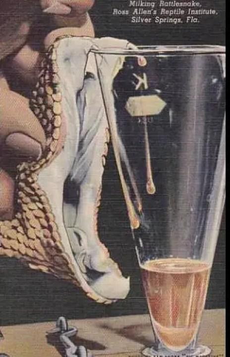 Afiche antiguo sobre como extraer veneno de una sepriente.