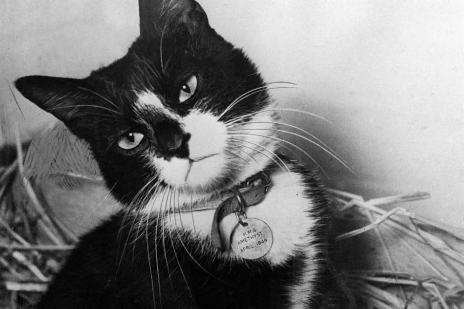 Fotografía del gato Simón y su medalla.