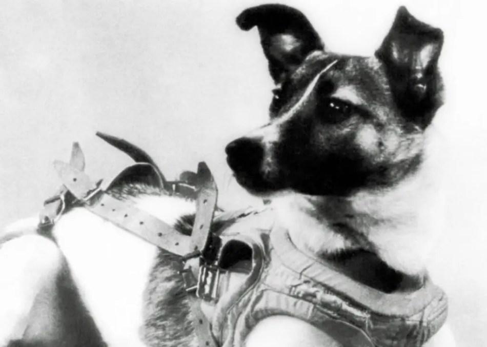 Fotografíade la perrita Laika.