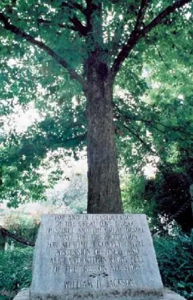 El árbol dueño de si mismo junto a su placa conmemorativa.