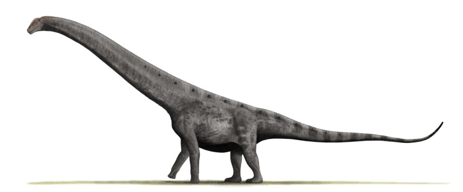 Ilustración de un Argentinosaurio.
