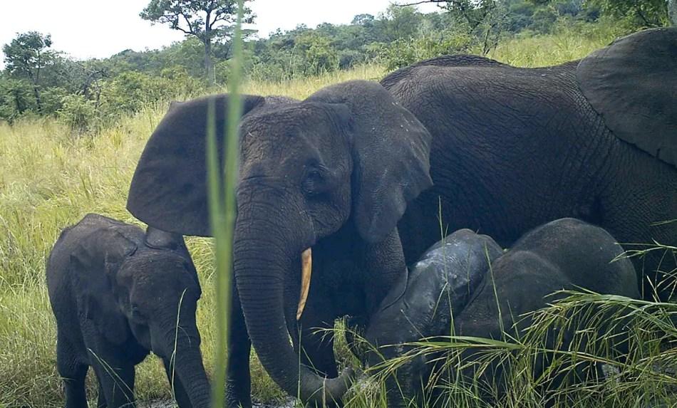 Elefantes en Sudán del Sur.