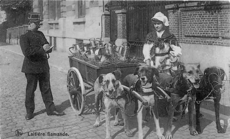 Fotografía de un grupo de perros, una mujer y un policia.