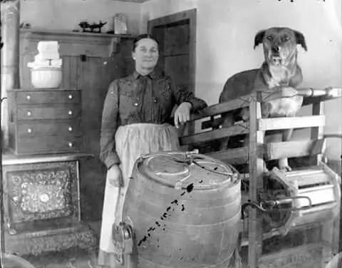Fotografía antigua de un perro de trabajo.