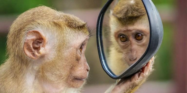 La prueba del espejo, el experimento para determinar la autoconciencia