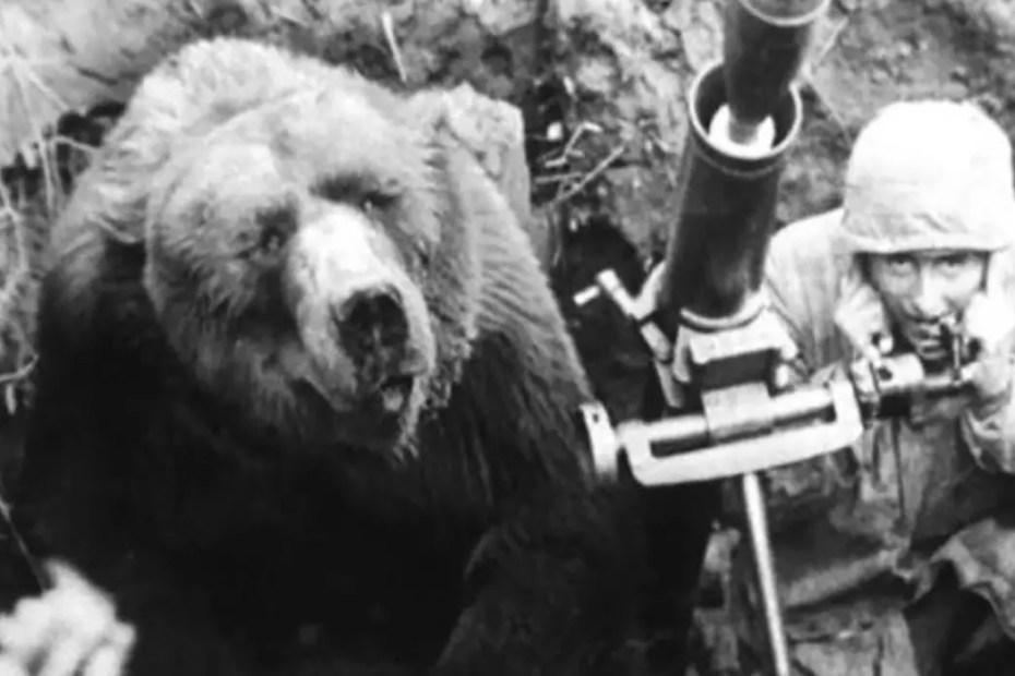 Imagen de un oso en una trinchera.