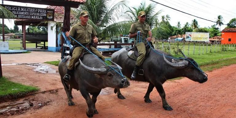 La unidad de policía que monta búfalos para patrullar el Amazonas