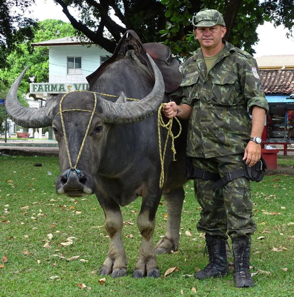 Oficial de la policía militar de Pará posando con sus búfalos.