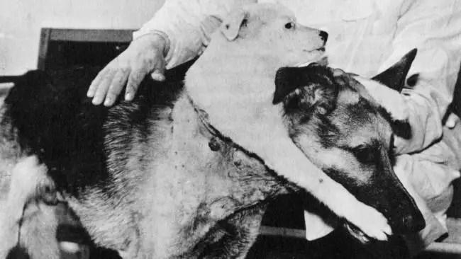 Imagen de los perros tras la cirugía.