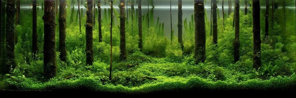 Aquapaisaje simulando un frondoso bosque.