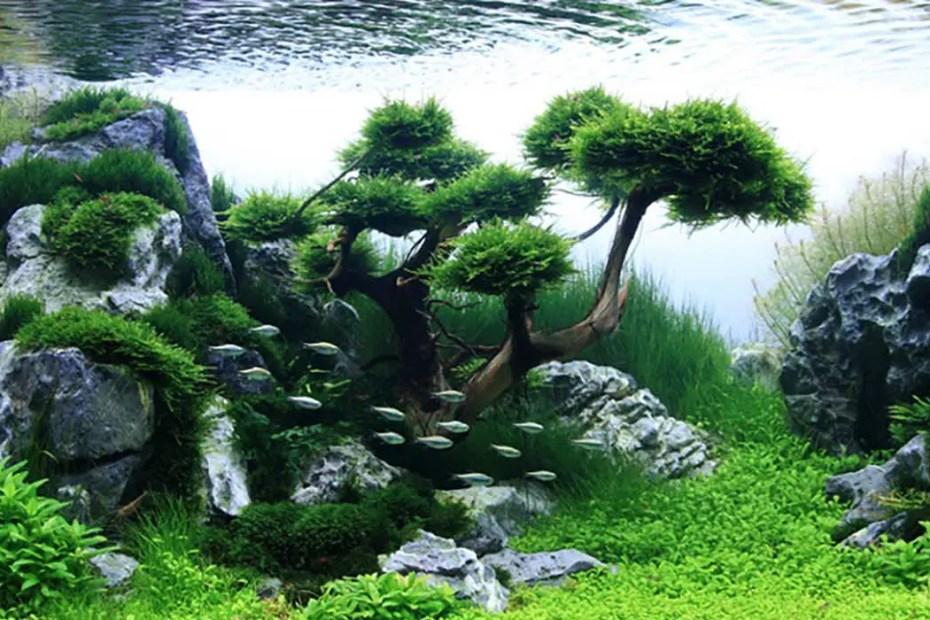 Bosque aquapaisaje.