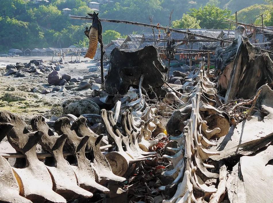 Huesos de ballena junto a las chozas de la tribu Lamafas.