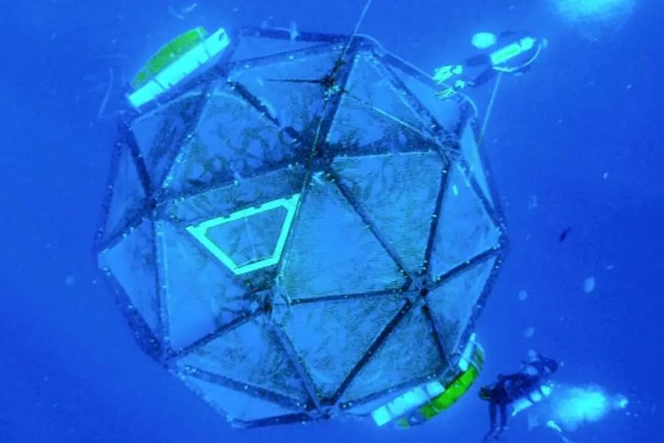 Esfera sumergida del Proyecto Velella con los peces en crecimiento en su interior.