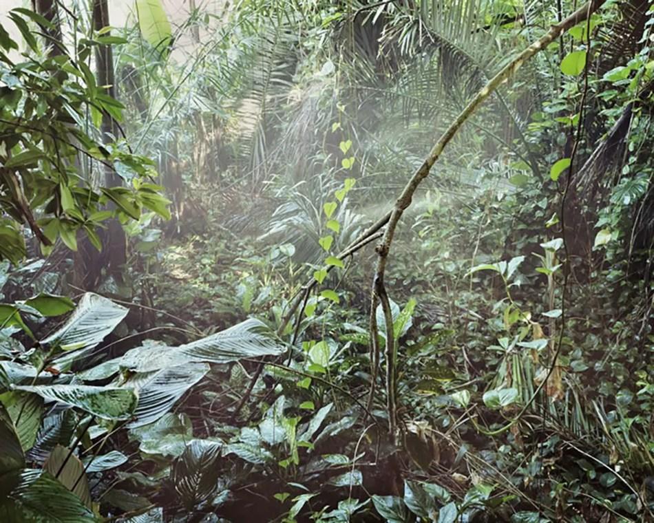 Interior de uno de los mini bosques tropicales hallados dentro de Biosphere 2.