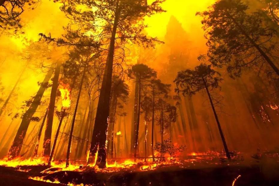 Bosque en llamas durante un incendio forestal.
