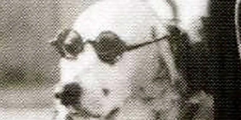 Jackie, la perra que ofendía personalmente al dictador Adolf Hitler