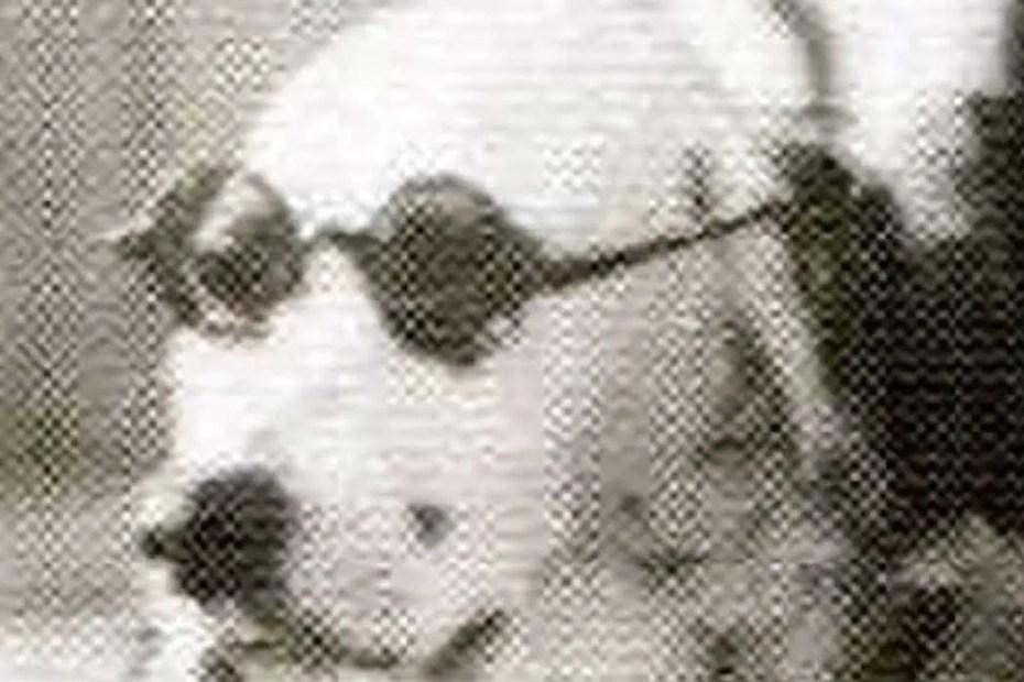 Jackie, la perra finlandesa. a
