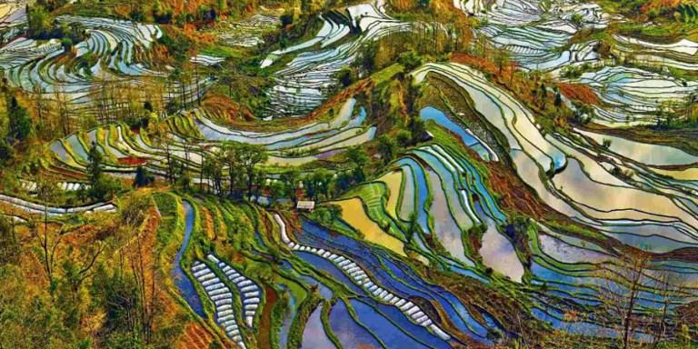 Las terrazas de arroz de Yunnan, un paisaje que parece una acuarela